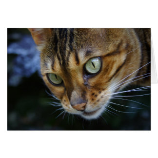 Beautiful Bengal Cat Card