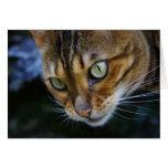 Beautiful Bengal Cat Cards