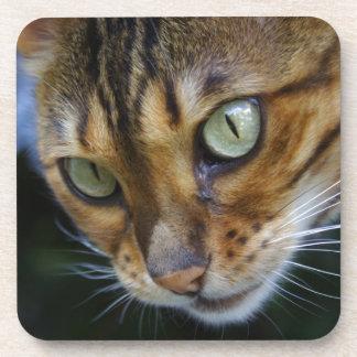 Beautiful Bengal Cat Drink Coaster