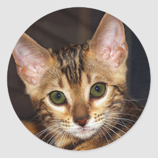 Beautiful bengal Kitty Classic Round Sticker