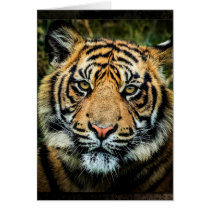 Beautiful Bengal Tiger Portrait - Card