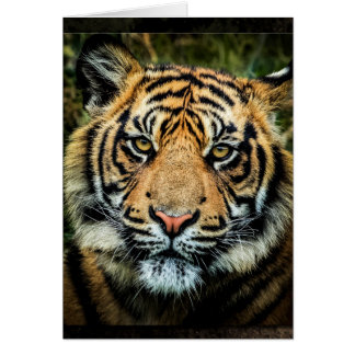 Beautiful Bengal Tiger Portrait - Card