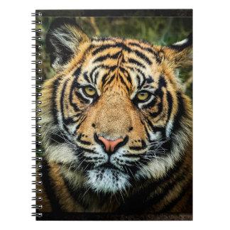 Beautiful Bengal Tiger Portrait - Notebook