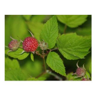 Beautiful Berries Postcard