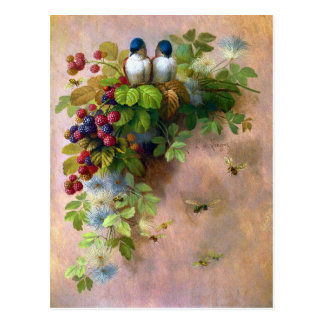 Beautiful Berry Vines and Blue Birds  Postcard
