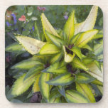 Beautiful Big Bright Green Leaves Drink Coasters