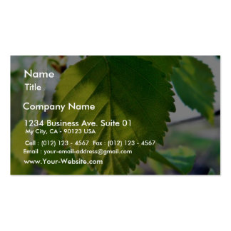 Beautiful Birch Leaves Business Card