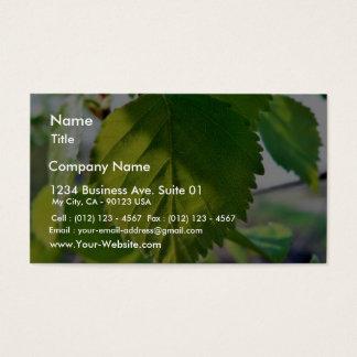 Beautiful Birch Leaves Business Card