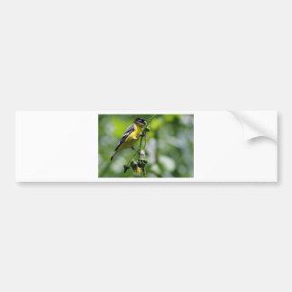 Beautiful Bird Car Bumper Sticker