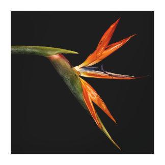 Beautiful Bird of Paradise Flower Floral Photo Canvas Print
