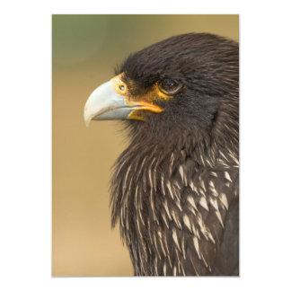 Beautiful Bird of Prey Invitation