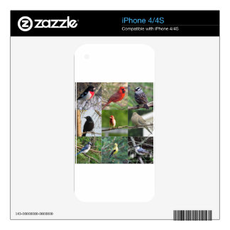 Beautiful Birds Decals For iPhone 4S