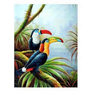 beautiful birds postcards 02