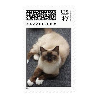 Beautiful Birman cat Postage