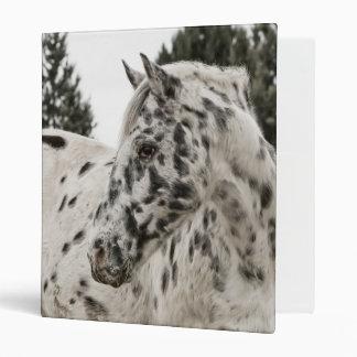 Beautiful Black and White Appaloosa Horse Binder