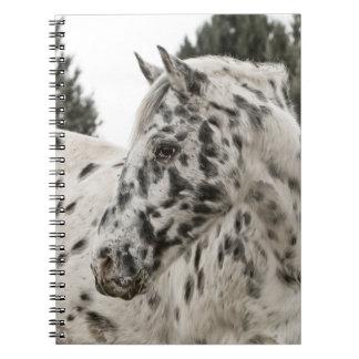 Beautiful Black and White Appaloosa Horse Notebook