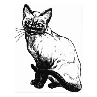 Beautiful black and white artwork - Siamese cat Postcard
