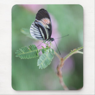Beautiful black and white butterfly mouse pad