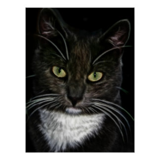Beautiful Black and White Cat Poster