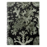 Beautiful black and white lichens drawing spiral notebooks