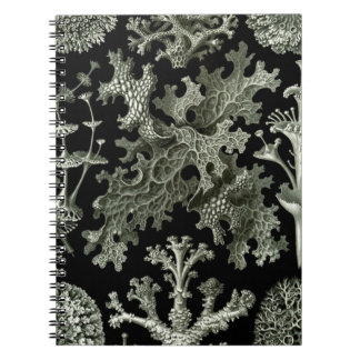 Beautiful black and white lichens drawing notebook