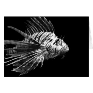 Beautiful Black and White Lionfish Card