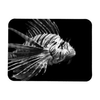 Beautiful Black and White Lionfish Magnet