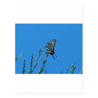 Beautiful Black And White Swallowtail Butterfly Postcard