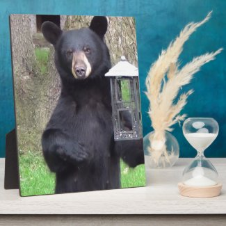 Beautiful Black Bear Photo Plaques
