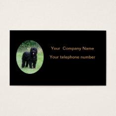Beautiful Black Briard Dog Business Card at Zazzle