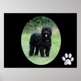 Beautiful black briard dog poster, print gift idea