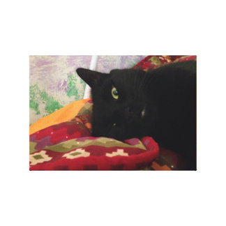 Beautiful Black Cat Canvas Print