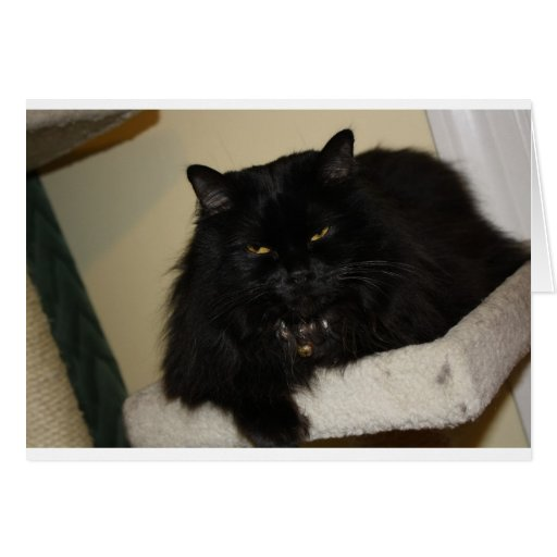 Beautiful black cat greeting card