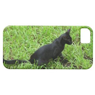 beautiful black cat in the grass iPhone SE/5/5s case