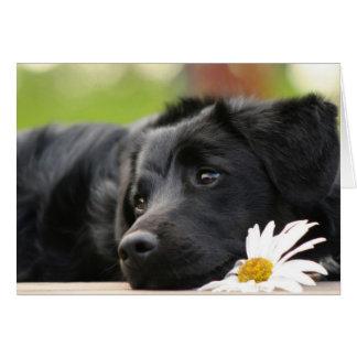 Beautiful Black dog and Daisy Design Card