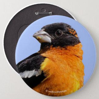 Beautiful Black-Headed Grosbeak in a Tree Pinback Button