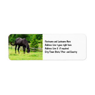 Beautiful Black Horse Label