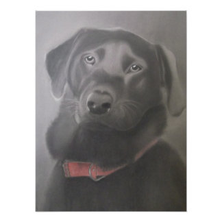 Beautiful Black Labrador Poster