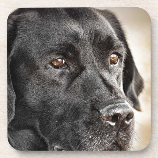 Beautiful Black Labrador Retriever dog design Drink Coaster