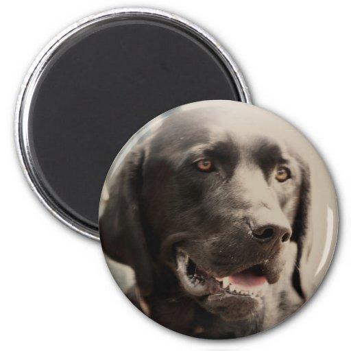 Beautiful Black Labrador Retriever Portrait Refrigerator Magnets