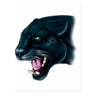 Beautiful Black Panther Postcard