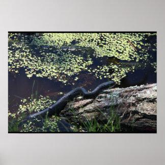 Beautiful Black Snake Print Poster