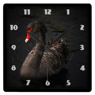 Beautiful Black Swan with a Bright Red Beak Square Wall Clocks