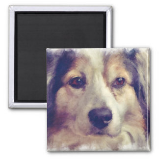 Beautiful Black Tri Australian Shepherd Dog 2 Inch Square Magnet