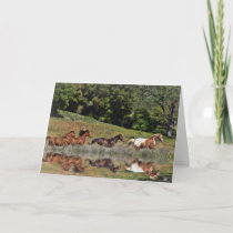 Beautiful Blank Horse Note Greeting Cards