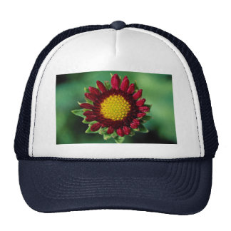 Beautiful Blanket flower Mesh Hats