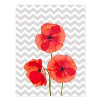 Beautiful blooming red poppies over grey chevron postcard