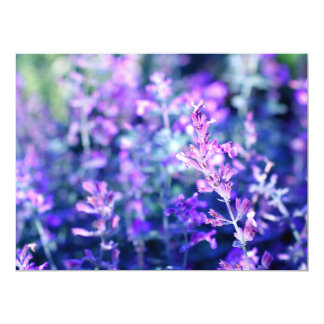 Beautiful blooming salvia card