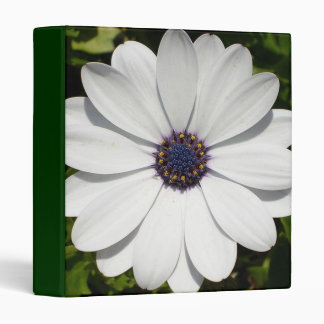 Beautiful Blossoming White Osteospermum Binder