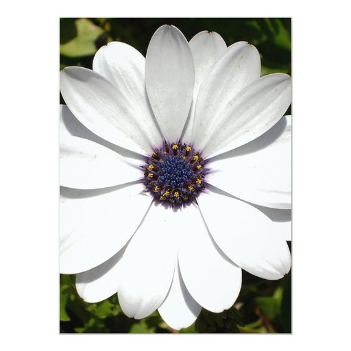 Beautiful Blossoming White Osteospermum Personalized Invitations